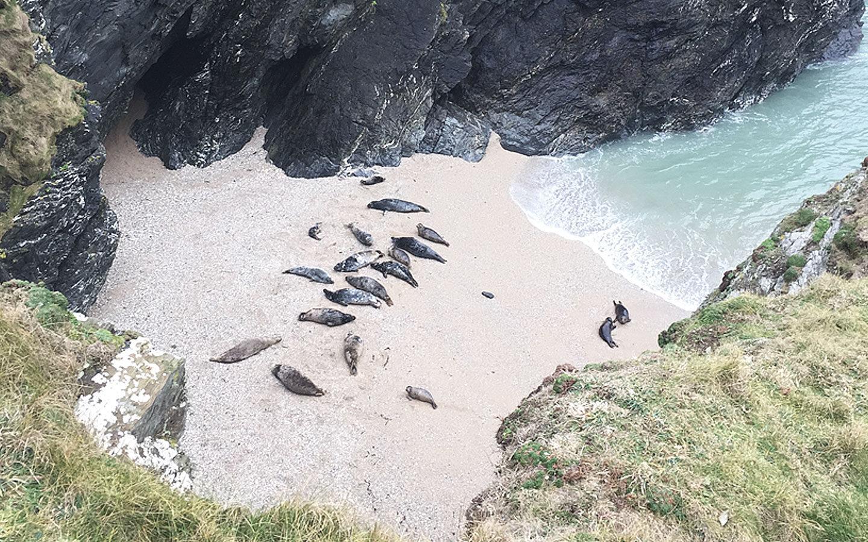 Polly Joke Beach Seal hideaway